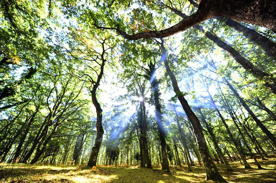 Candidatura Unesco Faggete Foresta Umbra, superato primo step
